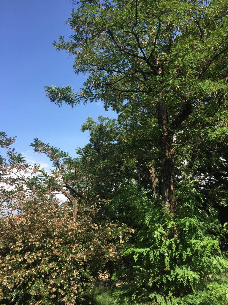 自然(緑2)